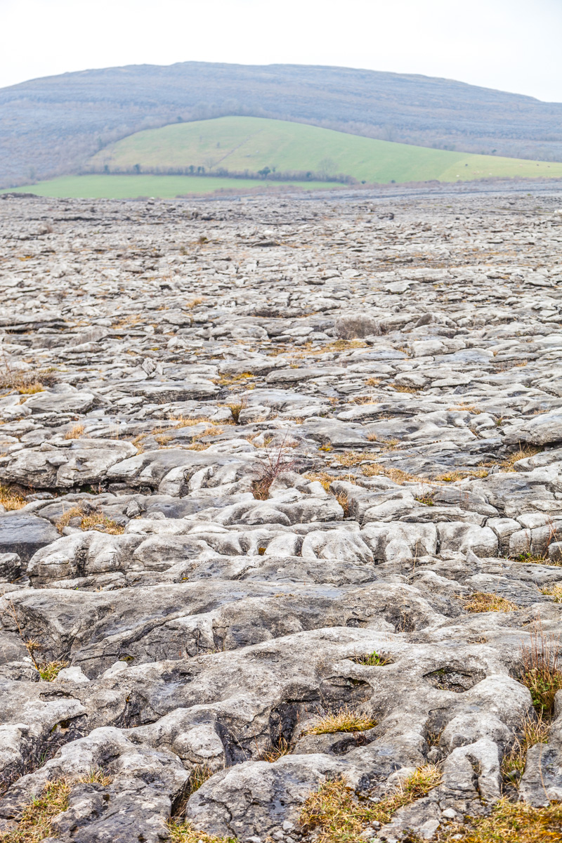 The Burren limestone pavement - WCF-9861.jpg