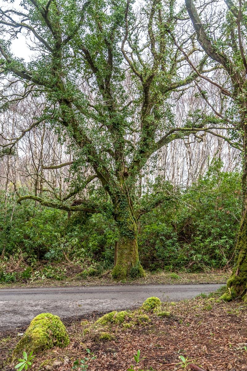 Tree - WCF-6678.jpg