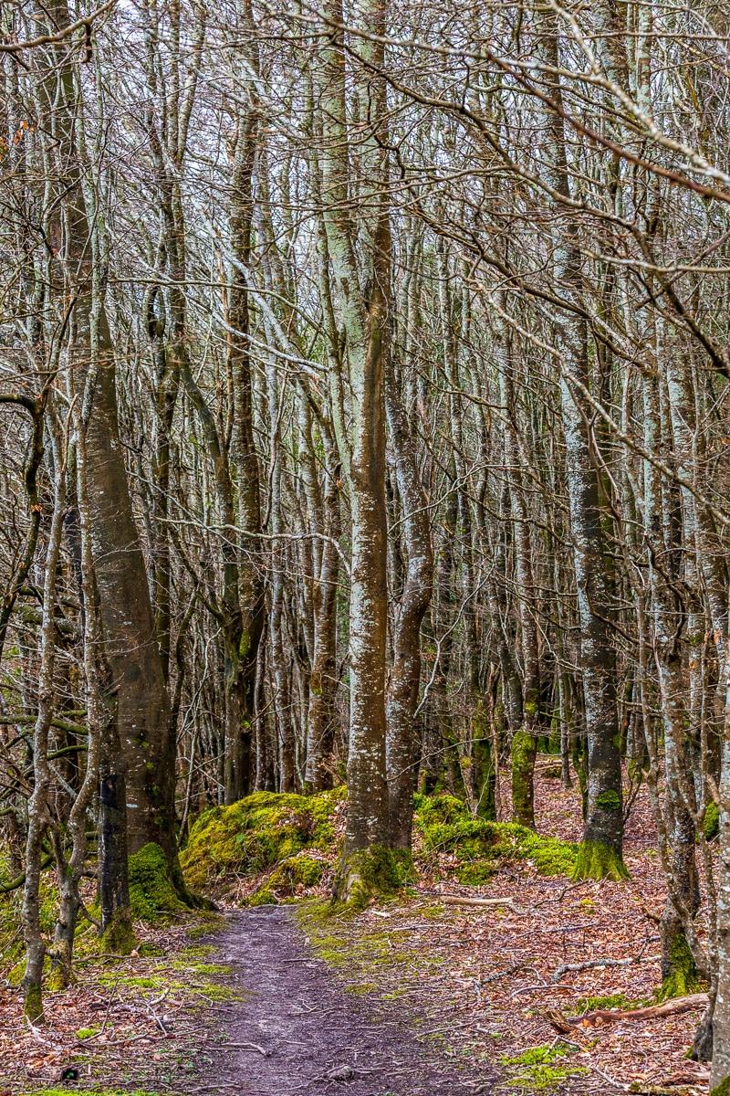 A wood. - WCF-0485.jpg