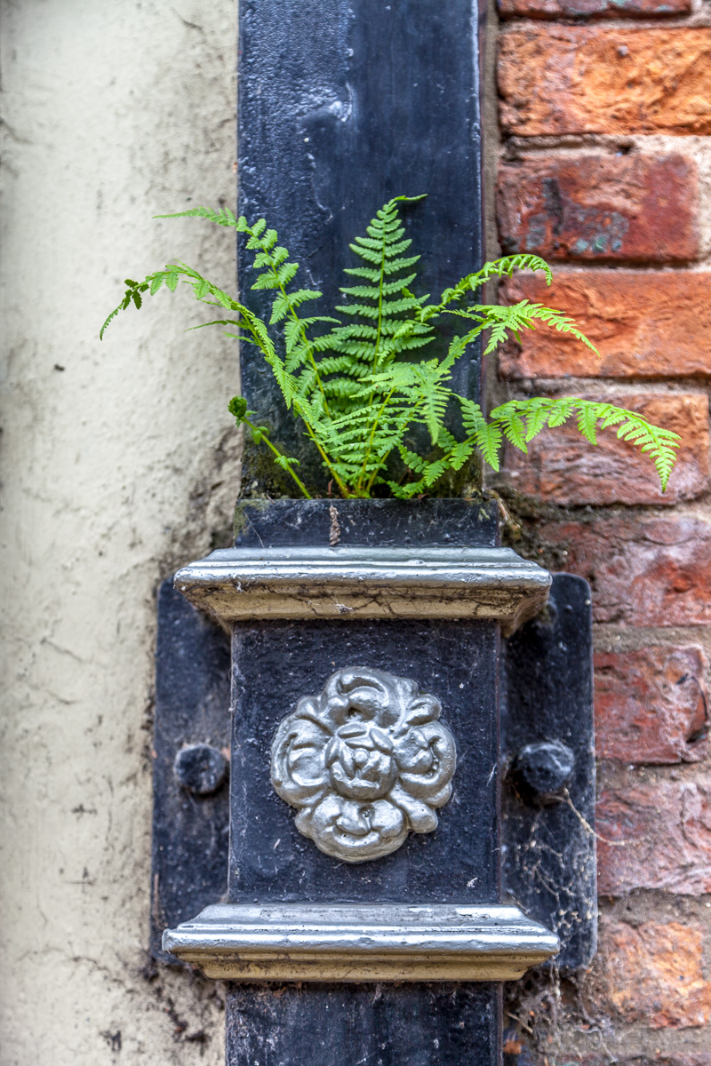 Downspout with fern in York - WCF-3766.jpg