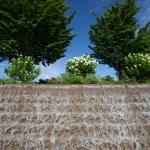 The North Carolina Arboretum, Asheville, NC