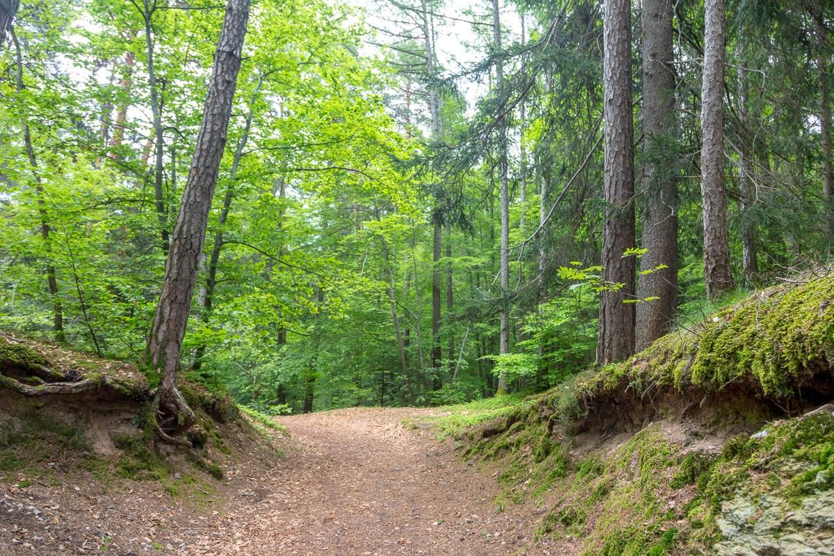 In the woods. - WCF-6028.jpg