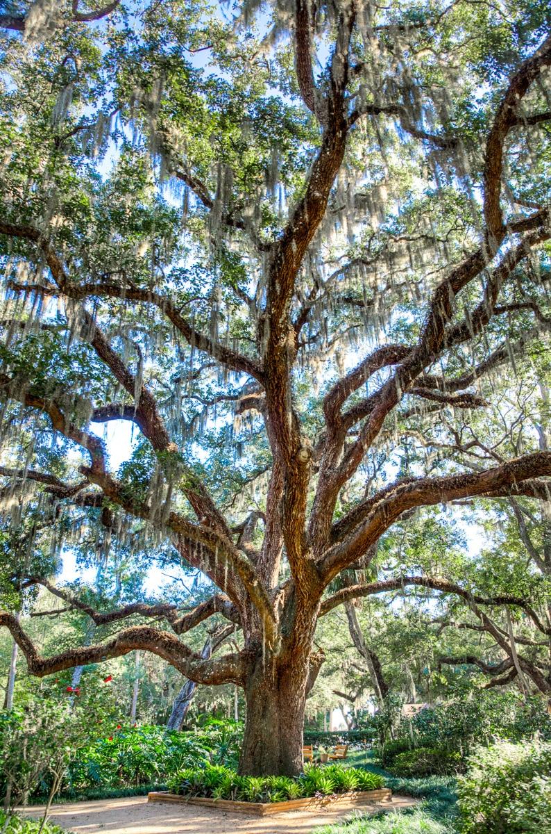 Washington Oaks State Park. - WCF-7.jpg