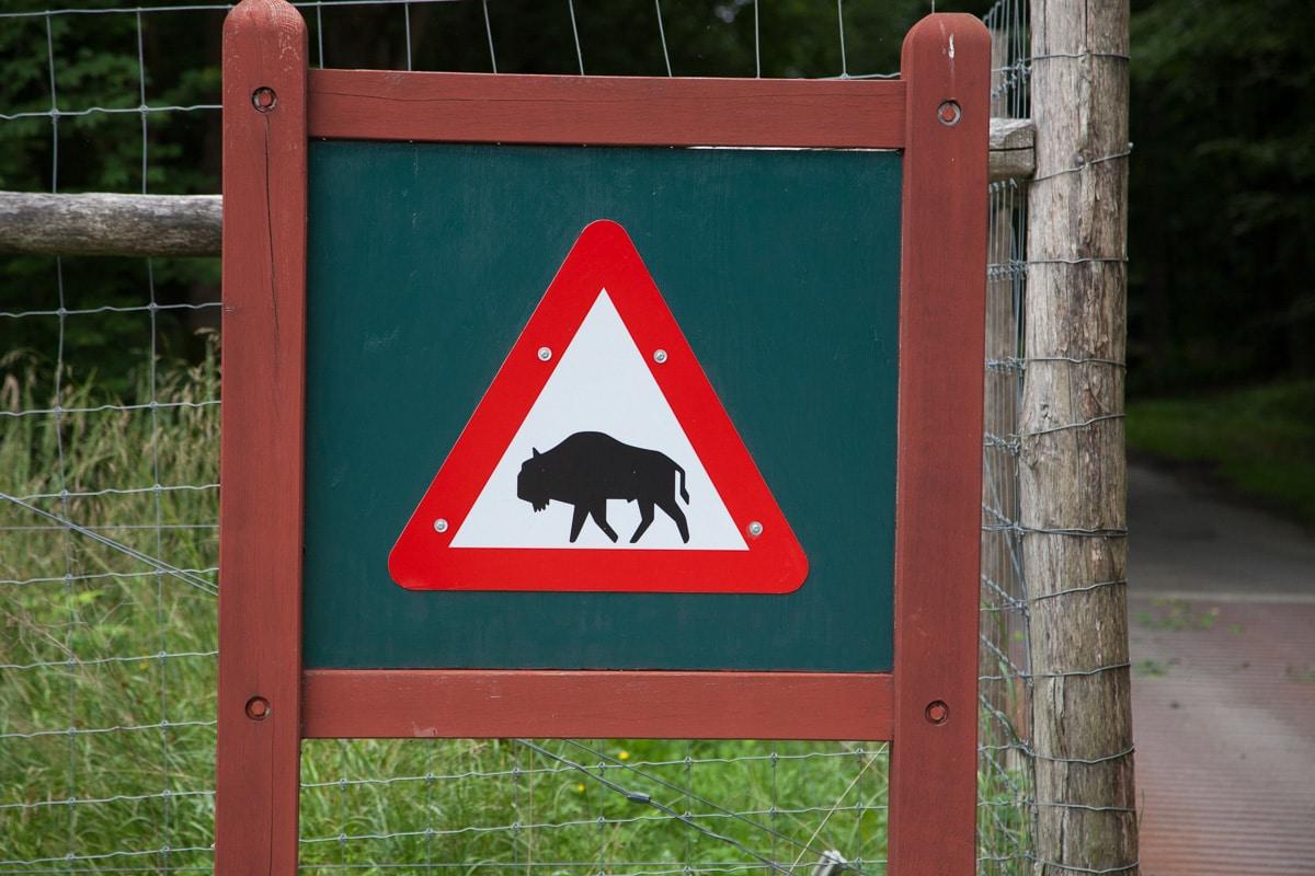 Bison crossing - WCF-9566.jpg