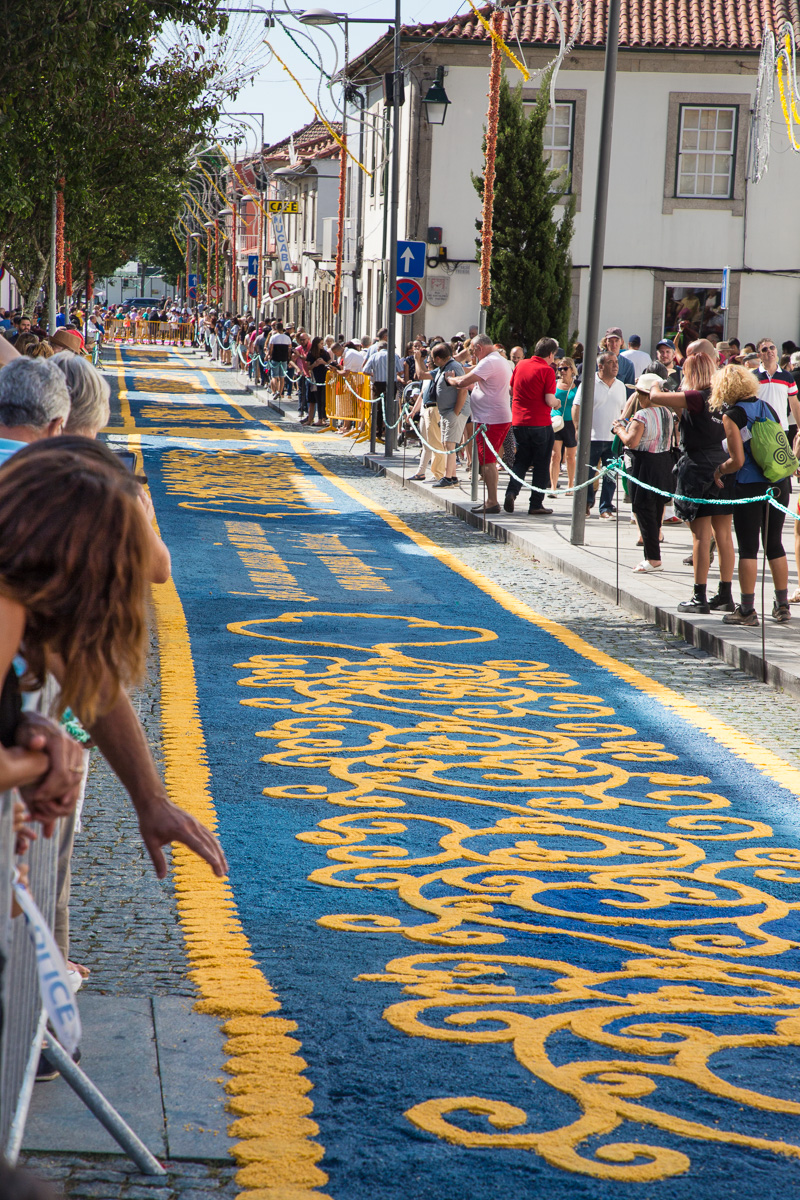 """Tapetes floridos"" or ""floral rugs"" fill the narrow streets. - WCF-8946.jpg"