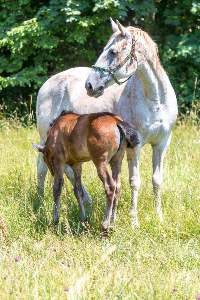 At the Lipica Stud Farm, original home of Lipizzaner stallions. - WCF-9413.jpg