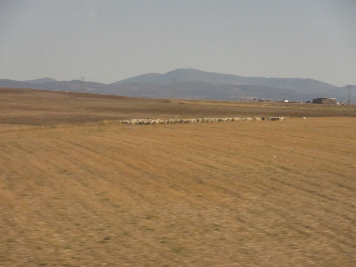View of the Spanish countryside near Madrid from the train (sorry for the blurry image).