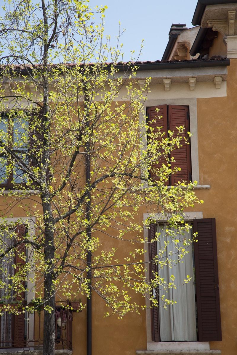 Primavera! - WCF-3022.jpg