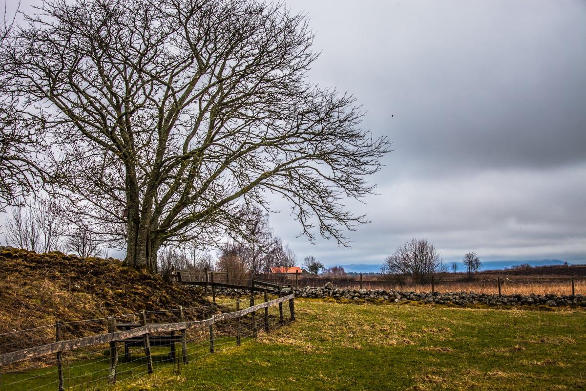 Skara and the Cranes of Hornborgasjön
