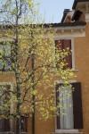 Primavera Italiana!