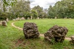 Stone Circles, Sticks, and Standing Stones